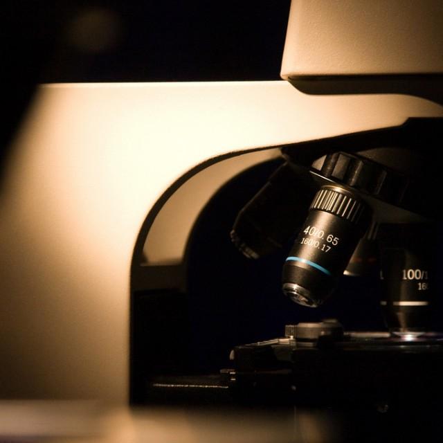 Wenig Action, viel Detektivarbeit: Das Fach Pathologie unter der Lupe