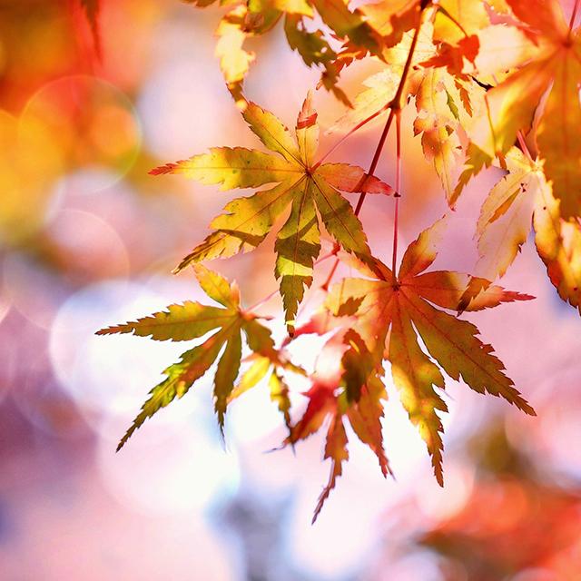 Herbstgartenzeit