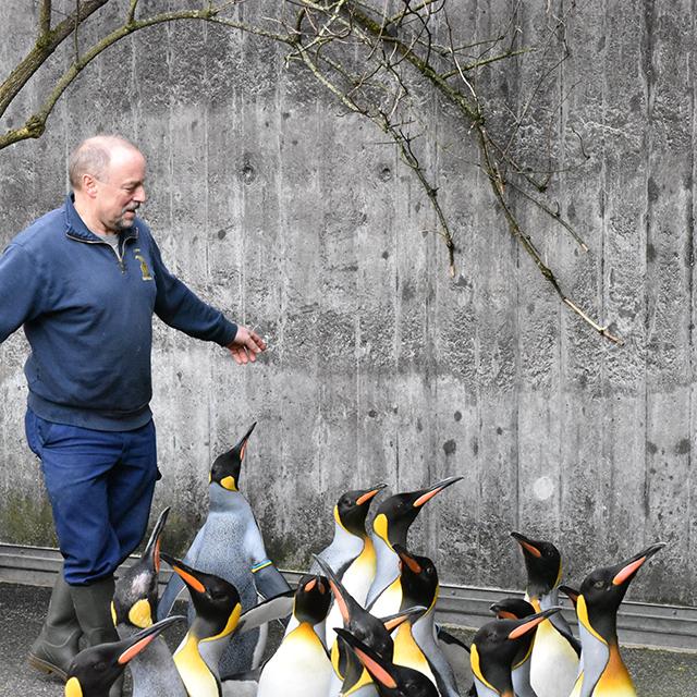 Mit Pinguinen spazieren gehen