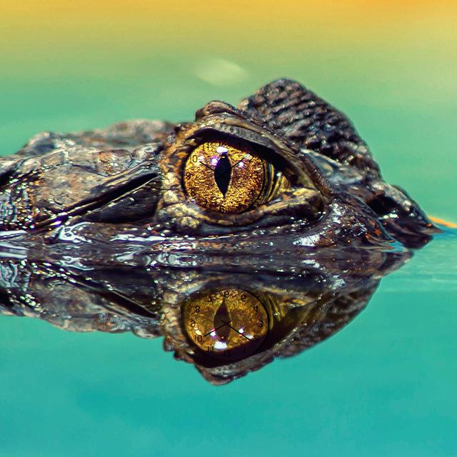 Wenn ich ein Bösewicht wäre, wäre ich... </br></br> ...das 'Tick Tock Croc' aus Peter Pan. Dann würde ich vielleicht einmal pünktlich sein.