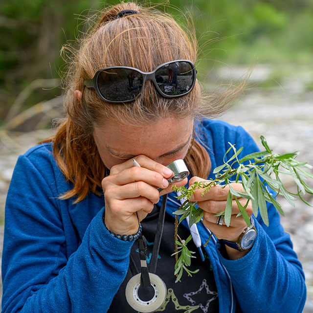 Frau betrachtet Pflanze durch Lupe